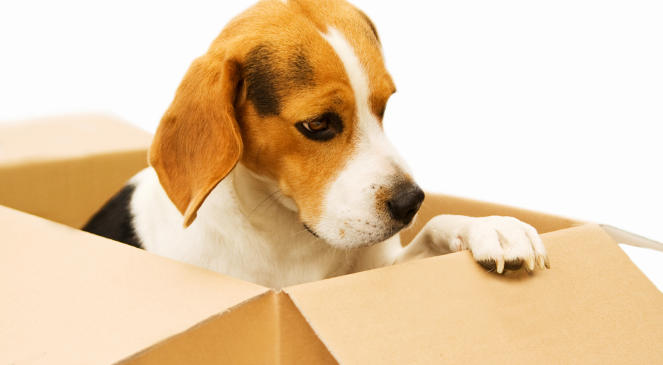 Image result for moving with dog